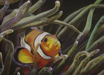 Clownfish and Anemone by HendrikHermans