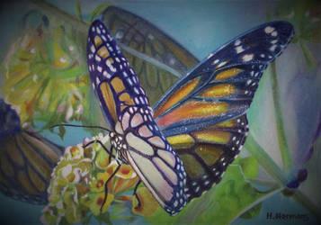 Monarch (Danaus plexippus) by HendrikHermans