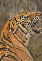 Tiger2018 by HendrikHermans