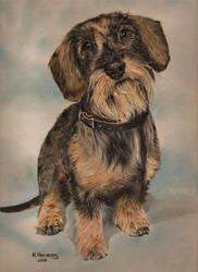 Tommy Miran's dog by HendrikHermans