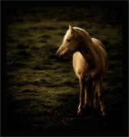 My horse by wild-vortex