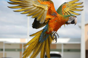 Camelot Macaw by Julii-chan