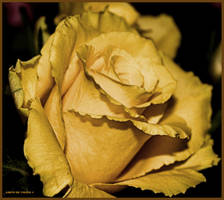 Happy Birthday Simona by Tigles1Artistry