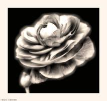 Cosmic Flowers by Tigles1Artistry