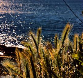 Ocean ....... by Tigles1Artistry