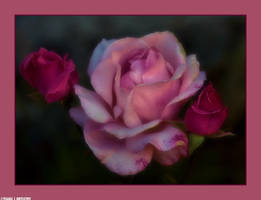 Flowers by my Window by Tigles1Artistry