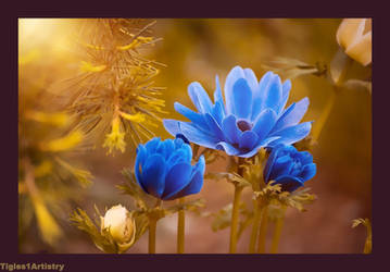 Gold And Blue by Tigles1Artistry