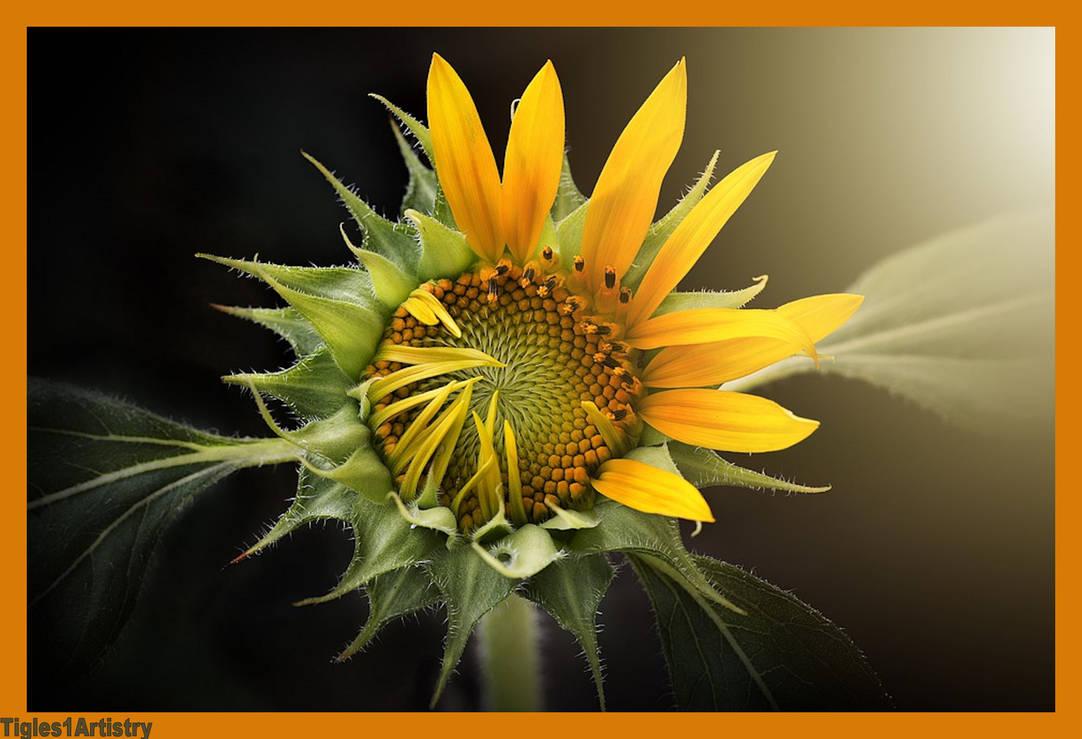 Sunrays..... by Tigles1Artistry