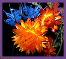 Colourful Winter Starts.. by Tigles1Artistry