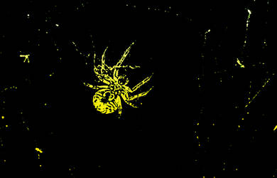 Spider by remusruffus