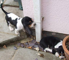 Basset Hounds by nogarDgnipeelS