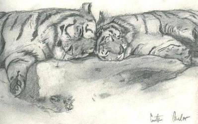 Tigers by CurtObi4
