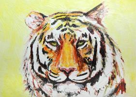 Tiger by Kiriwana