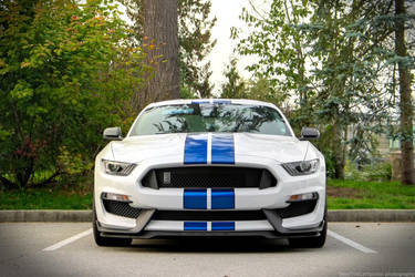 Shelby by SeanTheCarSpotter