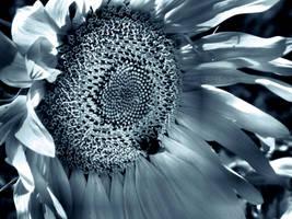 Sunflower by WhiteBook