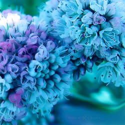 Soft Beauty by WhiteBook