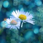 I Dream... by WhiteBook