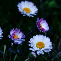 Wild Beauty by WhiteBook