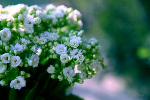 Simple beauties of nature by WhiteBook