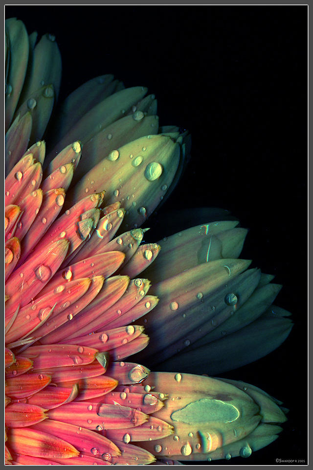 Natural hues by Swaroop