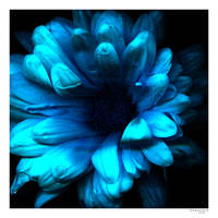 Flower from twilight zone by Swaroop