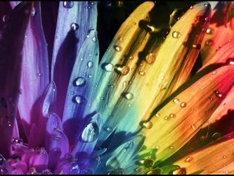 Floral Rainbow by Swaroop