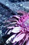 Silver pink by Swaroop