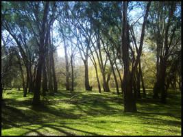 trees by jasmine17