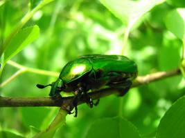 green in green by mmddyy