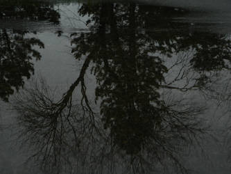 Reflection by Raptor-Girl