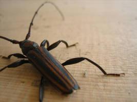 Bug by nikki2290