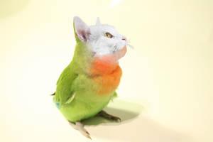 Cat Bird by EmeraldTokyo