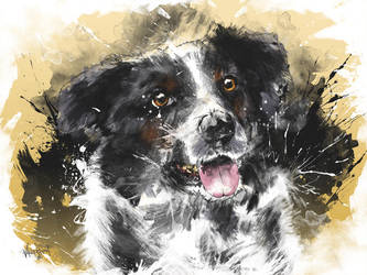 In a Border Collie's Eyes by thefreshdoodle