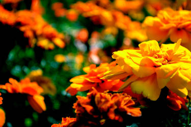 Yellow is the most vibrant color? by Refreshing-Refrain