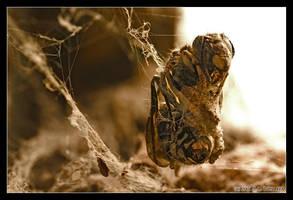 chrysalis by Bosaiya
