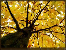 Earthy Yellow Shadows by eVolutionZ