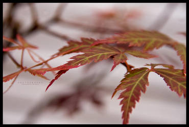 Nature ::02:: by eVolutionZ