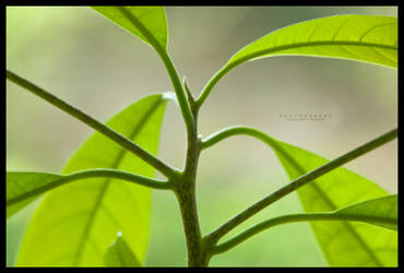 Nature ::03:: by eVolutionZ