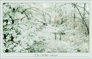 The White Forest by eVolutionZ