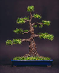Polymer clay pine tree bonsai by eVolutionZ