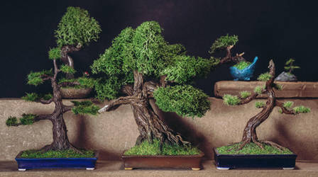 Sculpted bonsai trees collection by eVolutionZ