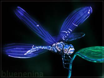 WP blue libelula by nenina