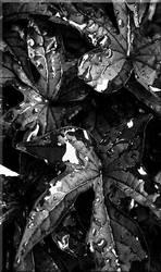 Metallic Reflection by Boshaft
