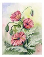 Poppies by Alina-Kurbiel