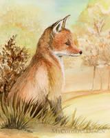 Red Fox by Alina-Kurbiel