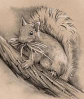 Busy Squirrel by Alina-Kurbiel