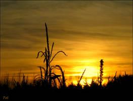 Corn in the gold sky by Patguli