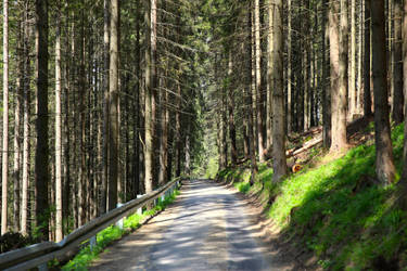 Tatra Mountain Forest by directql