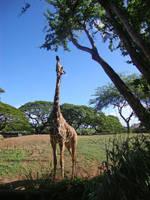 What's Taller than a Giraffe? by Dolphishy
