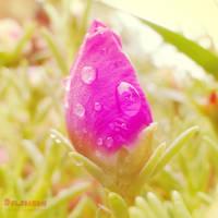Soft Bright Bud by Dolphishy